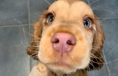 «Эти глаза просто гипнотизируют»: собака прославилась на весь мир из-за невероятных глаз