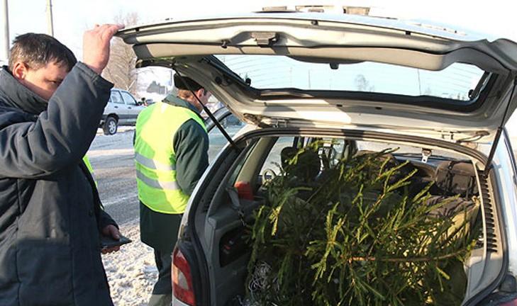 Лесная охрана провела более 1,6 тыс. рейдов в период зимних праздников