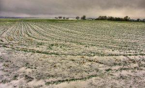 Минсельхозпрод о будущем урожае: озимые пока переносят теплую зиму неплохо