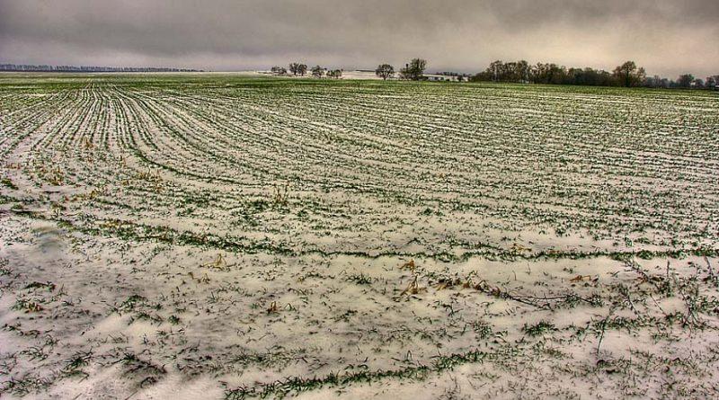 Опасных для озимых низких температур пока не ожидается - Белгидромет