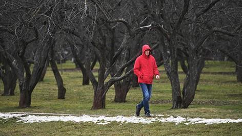 Зима без снега может привести к исчезновению комаров летом. Почему это плохо?