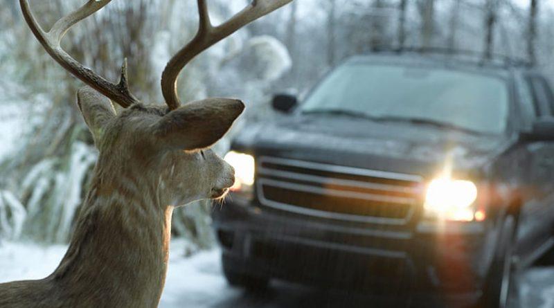 Почему нельзя подбирать сбитых на дороге животных?
