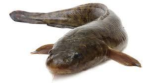 Рыбалка на налима запрещена
