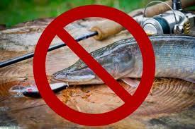 Скоро начнется череда весенних нерестовых запретов на лов рыбы