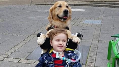 Собака смогла исцелить очень больного ребенка в Великобритании