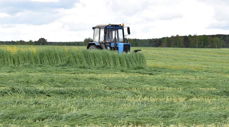 Хозяйства Быховского района приступили к заготовке кормов