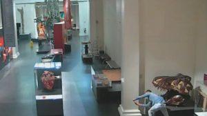 Мужчина проник в закрытый музей ради селфи с динозавром