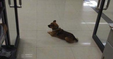 Преданная собака три месяца ждала хозяина в больнице, но он так и не пришел