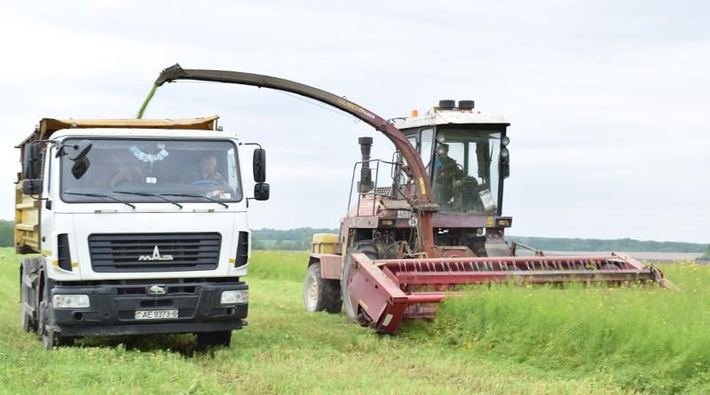 В ОАО «Володарский» ведут укос люцерны и сурепицы на зеленый корм для общественного поголовья