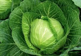 В стабфонд Могилевской области планируют заложить 3,7 тыс. т картофеля и более 1,8 тыс. т капусты