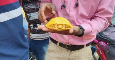 Уникальную желтую черепашку обнаружили в Индии