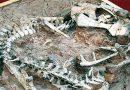В Китае ученые обнаружили окаменелость детеныша динозавра возрастом более 200 млн лет